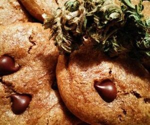 Almond Butter Cannabis Cookies, Gluten-free — Steemit